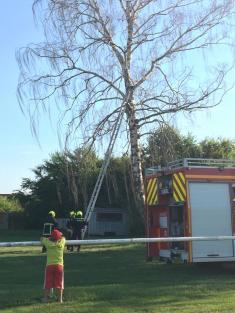 1. oficiální výjezd jednotky...kácení suchého stromu u tenisového kurtu